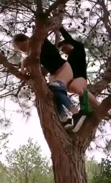 [短视频区] 高枝操逼